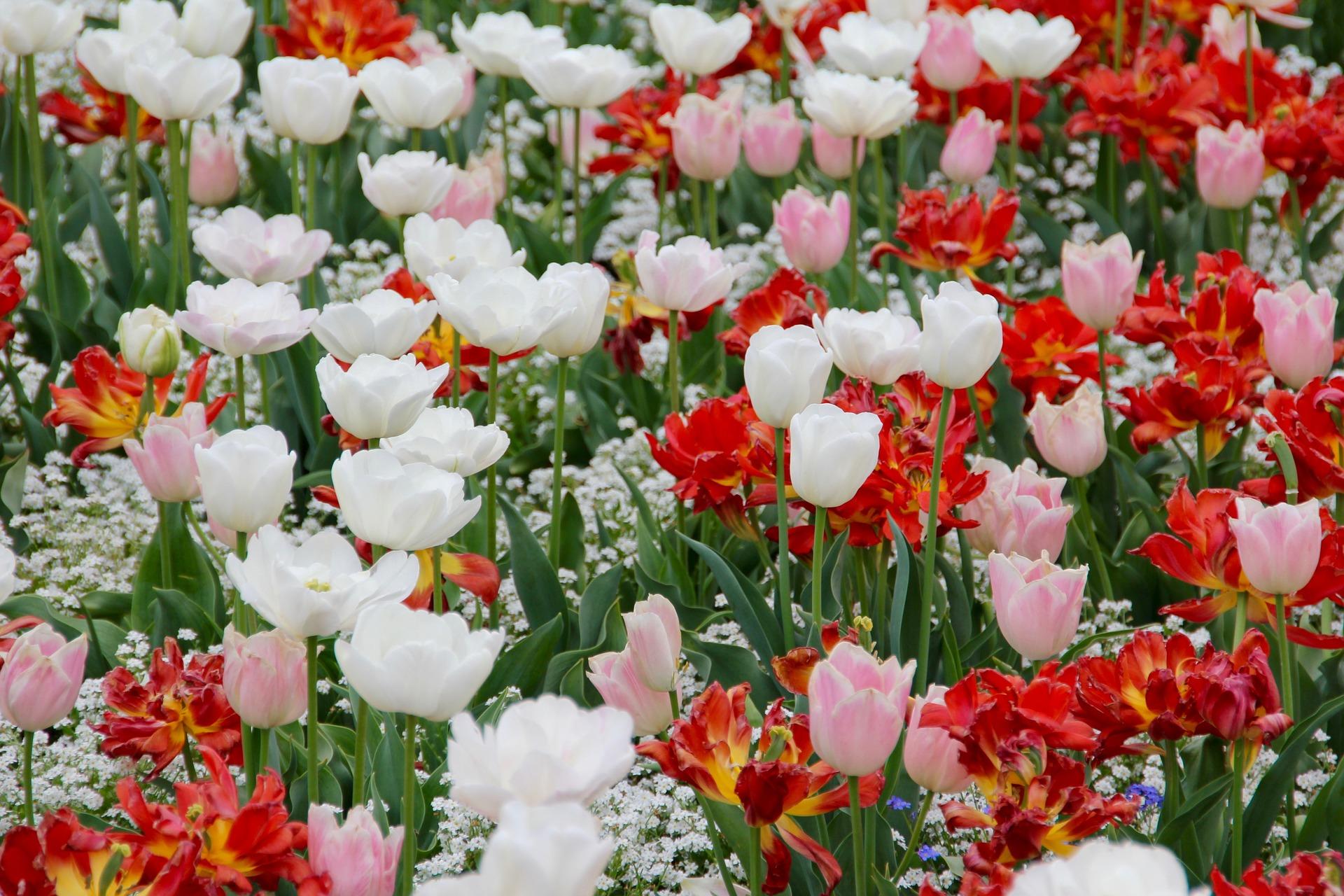 poésie le printemps